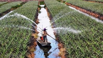 Khó như đầu tư vào nông nghiệp công nghệ cao