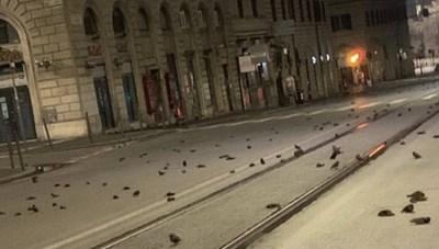 'Cơn mưa' xác chim trong đêm giao thừa tại Ý khiến người dân hoảng hốt