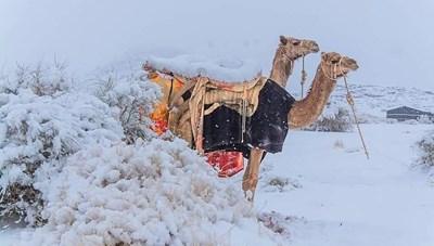 [VIDEO] Sa mạc Sahara bị bao phủ bởi tuyết