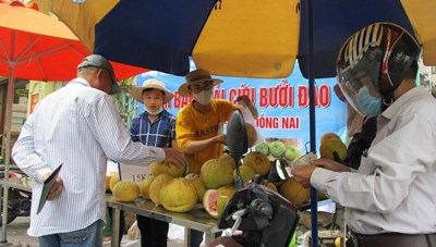 Chung tay 'giải cứu' bưởi đào đặc sản Đồng Nai