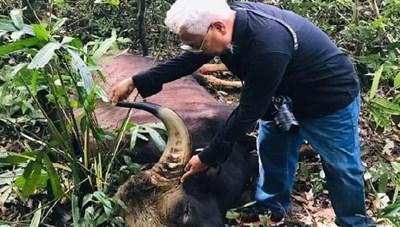 Thêm một con bò tót ở khu bảo tồn bị chết do kiệt sức