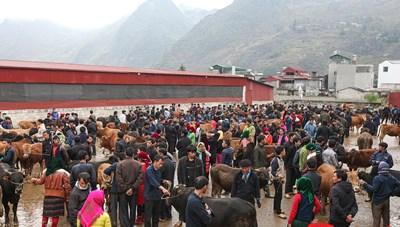 [ẢNH]Phiên chợ bò ở cao nguyên đá