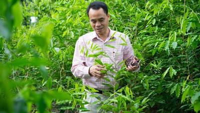 Giữ gìn tài nguyên rừng