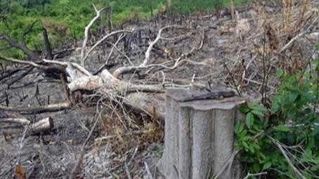 Phú Yên: Khởi tố 5 cán bộ liên quan đến vụ mở đường để phá rừng giáp ranh
