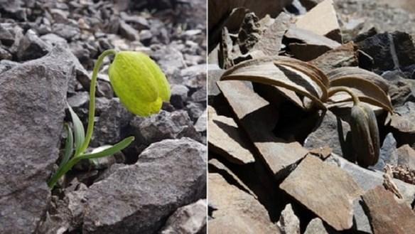 Cây thảo dược biết ngụy trang