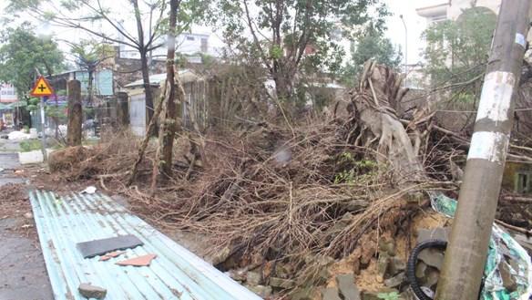 Quảng Nam: Cần dọn dẹp cây cối ngã đổ sát TTYT TP Tam Kỳ