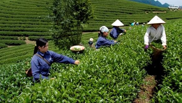 Thái Nguyên: 108 xã đạt chuẩn nông thôn mới