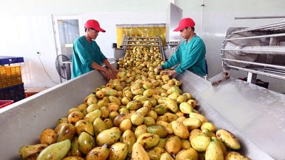 Lo ngại thiếu chuỗi thực phẩm an toàn