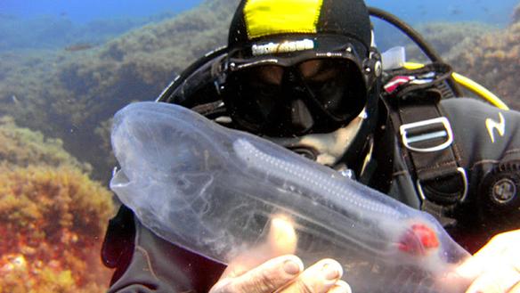 Câu được viên kẹo trong suốt, ngư dân thích thú khi biết đó là báu vật đại dương