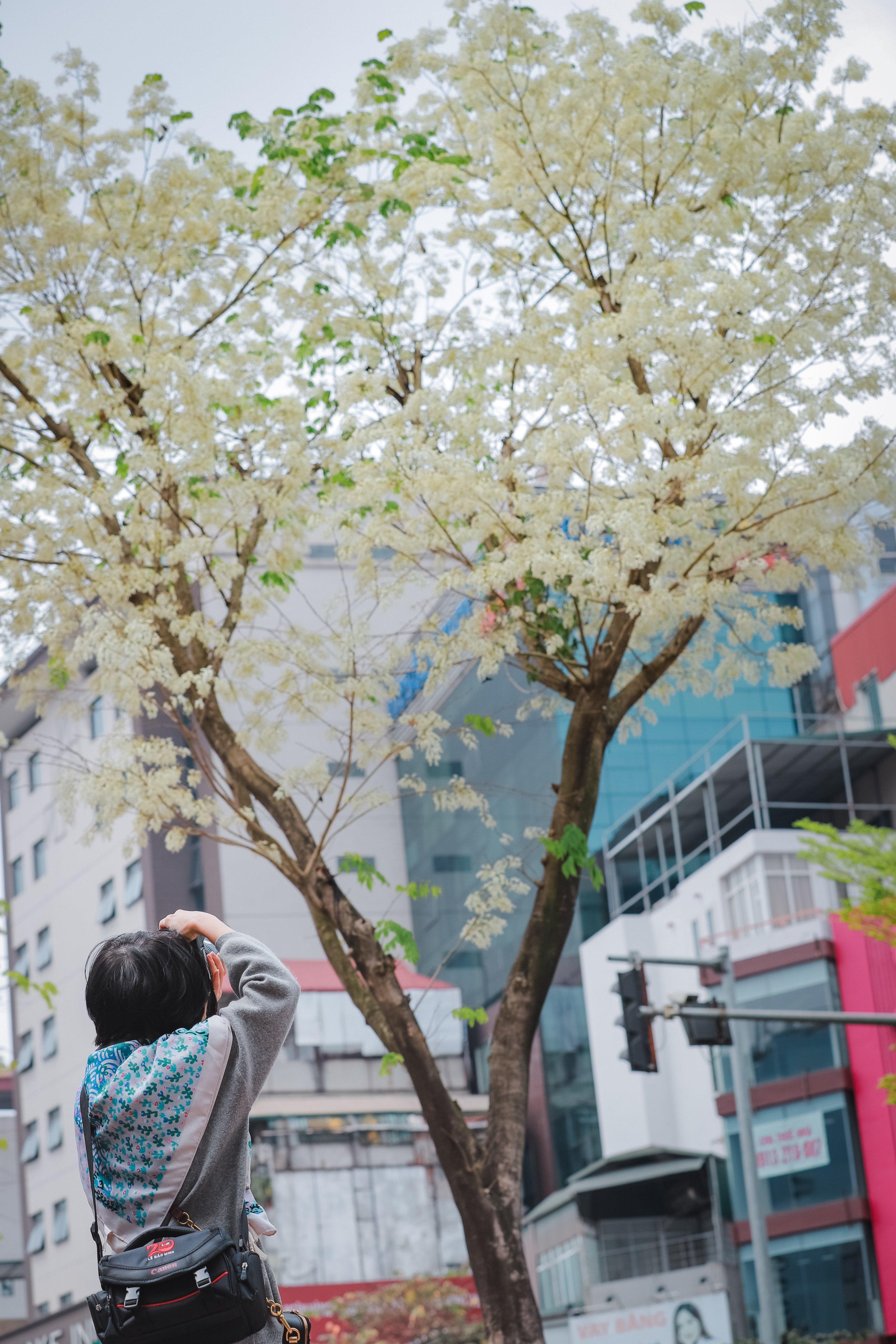 Hà Nội đẹp dịu dàng giữa màu trắng hoa Sưa  - Ảnh 9