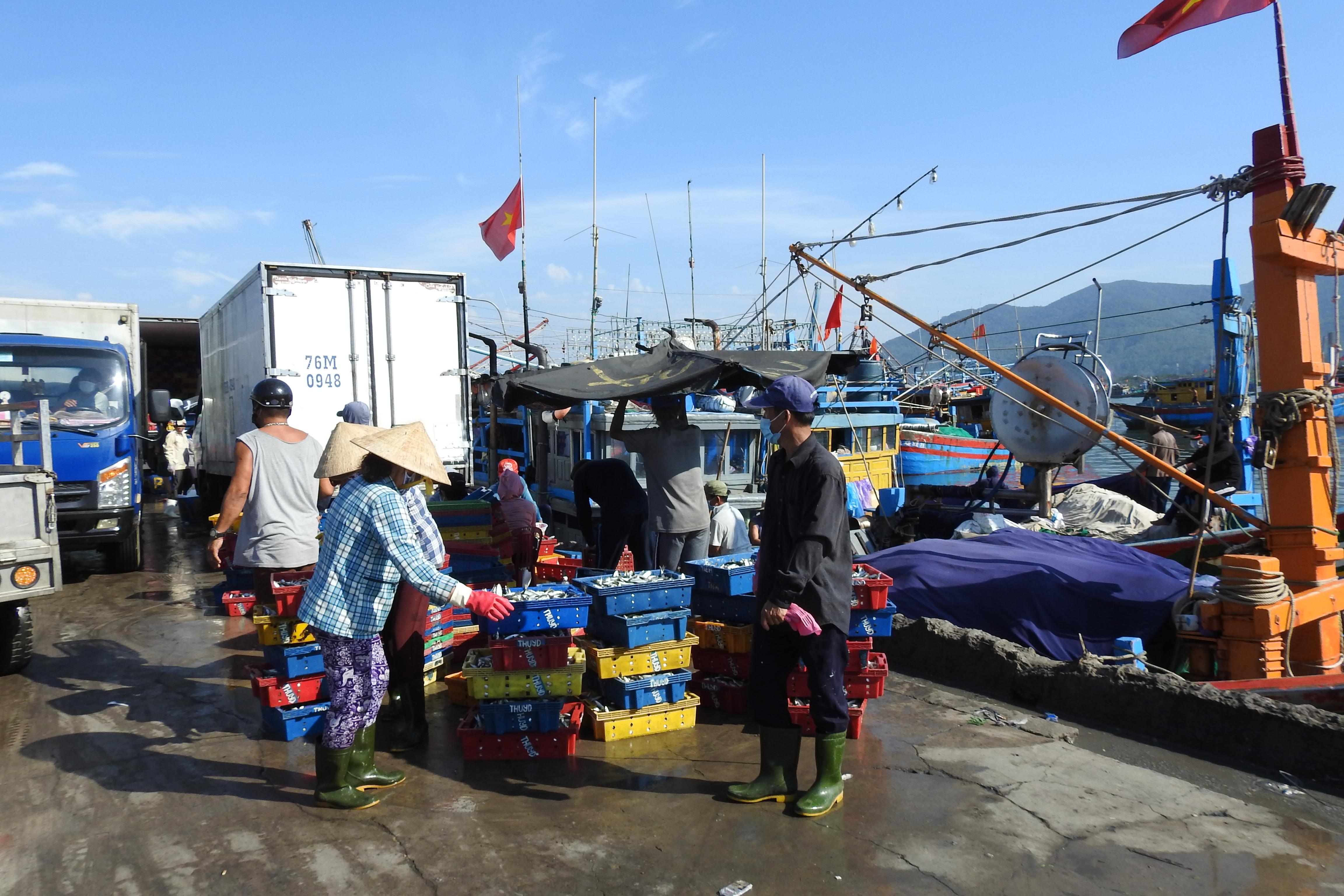 Hàng trăm tấn thủy, hải sản ở Cảng cá Thọ Quang được tiểu thương chuyển đến các chợ trên địa bàn TP Đà Nẵng để tiêu thụ. Ảnh Bình Nguyên.