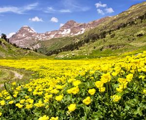 [ẢNH] 15 địa điểm có mùa xuân đẹp nhất thế giới