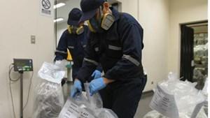 Nửa tấn cocaine giấu trong container chở cá đông lạnh