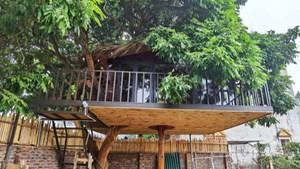 Ông bố ở Hà Nội chi trăm triệu đồng làm nhà trên cây độc đáo tặng vợ con