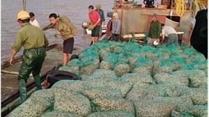 Hải Phòng: Doanh nghiệp tự ý bán quyền khai thác cát