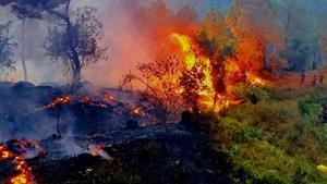 Hơn 30ha rừng thông bị thiêu rụi trong đêm