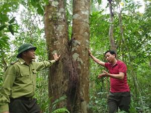 Báu vật rừng xanh