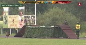 Chó nghiệp vụ Việt Nam bỏ chướng ngại vật nhảy vào nước lạnh ở Army Games