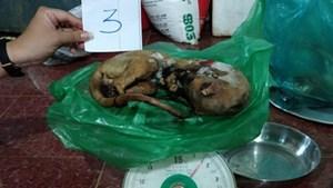 Đắk Nông: Bắt quả tang người phụ nữ mua bán trái phép động vật quý hiếm