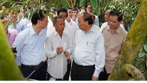 Thủ tướng thăm mô hình nông nghiệp 'trái mùa nghịch vụ' ứng phó hạn mặn