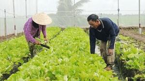 Ngày càng nhiều hộ đồng bào Khmer thoát nghèo
