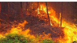 Vĩnh Phúc: Điều tra nguyên nhân vụ cháy rừng trồng