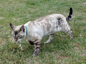 [ẢNH] Những bằng chứng cho thấy mèo là loài vật thống trị cả thế giới