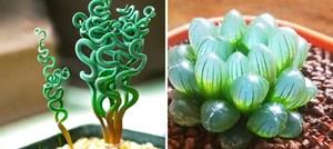[ẢNH] 19 cách để trồng một khu vườn đẹp trong nhà của bạn