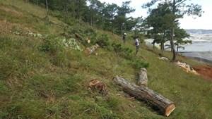 Xác định chủ mưu vụ phá rừng và lấn chiếm trái phép 1.250 m2 đất rừng ở Đà Lạt