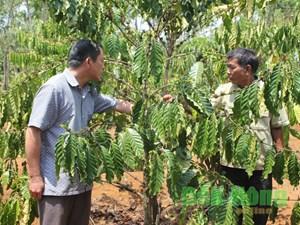 Giảm nghèo bền vững ở Đắk Nông