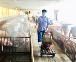 Chăn nuôi an toàn sinh học: Giải pháp để vượt qua 'bão dịch'