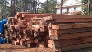 Kon Tum: Phát hiện 139 vụ phá rừng, 5 cán bộ bị kỷ luật