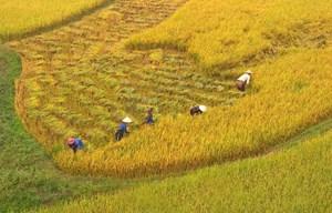 Ủng hộ miễn thuế sử dụng đất nông nghiệp đến năm 2025