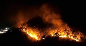 Italy cảnh báo về sự gia tăng các vụ đốt rừng có chủ ý