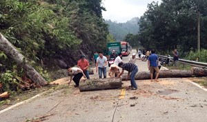 Quảng Nam: CSGT giúp dọn dẹp cây đổ chắn ngang đường