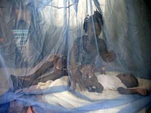 WHO: Số ca tử vong do bệnh sốt rét có nguy cơ tăng cao