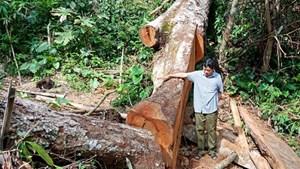 Tăng cường phối hợp kiểm tra, xử lý các vụ phá rừng