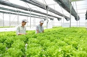 Liên kết chuỗi và giá trị nông sản