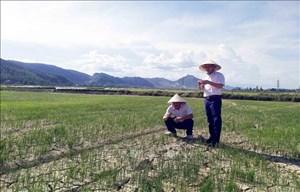 Nguy cơ hạn hán, thiếu nước ở Trung Bộ