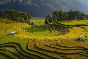 Nhiếp ảnh Việt Nam giành Huy chương Vàng FIAP