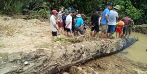 Hai nông dân mò ốc 'được' cây gỗ quý trăm năm dưới lòng sông