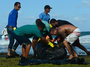 'Thủy triều đen' tấn công bờ biển Brazil