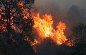 Australia: Cháy rừng hoành hành khắp miền Đông