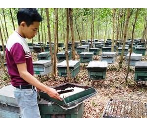 Hà Tĩnh: Hơn 200 thùng ong nuôi chết bất thường