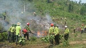 Phòng cháy, chữa cháy rừng: Dự báo sớm nguy cơ để ứng phó kịp thời