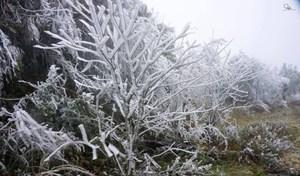 [ẢNH] Chiêm ngưỡng cảnh băng tuyết trắng xóa tại Mù Cang Chải