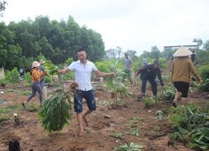 Quảng Nam: Bức xúc vì chính quyền xã thuê nhổ cây keo do dân trồng