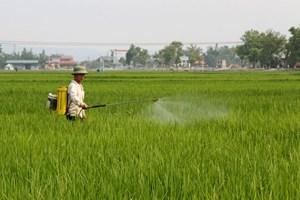 Chặn nguy cơ bùng phát dịch bệnh trên lúa đông xuân