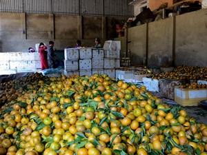 Nông sản: Không liên kết, khó tiêu thụ