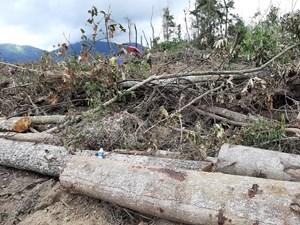 Lâm Đồng: Phát hiện vụ phá rừng ở huyện Đam Rông